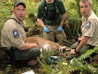 WSFW Agents with Cougar